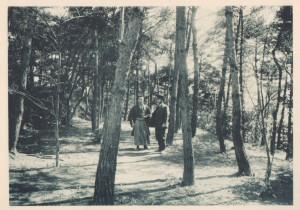 54.1923(大正12年)校内松林